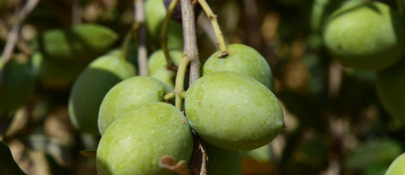 Maquinaria agrícola oliva